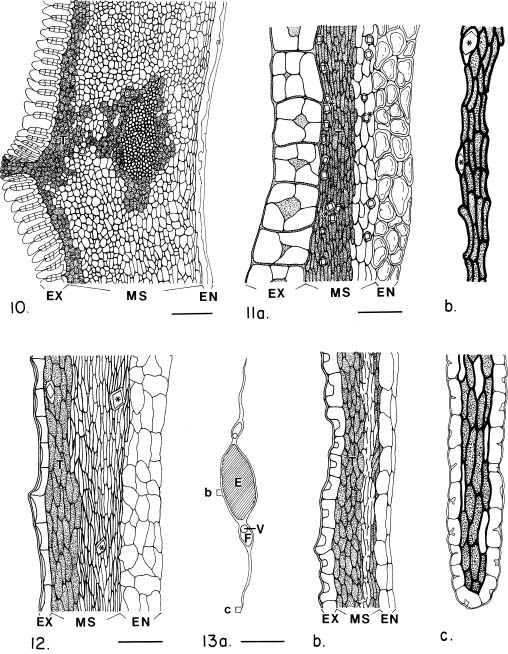 Seed coat anatomy and its relationship to seed dispersal in ...