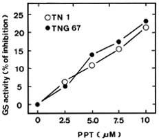 Phosphinothricin tolerance in rice (Oryza sativa L ) seedlings is
