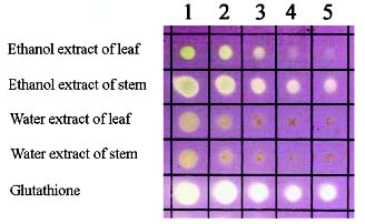chromatography of different leaf extracts Extraction of spinach pigments and thin layer chromatography from spinach leaves and then repeat the above tlc of you spinach extract but use a different.