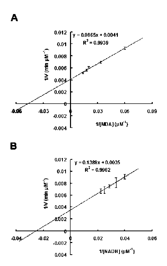 effect of varying temperatures on enzymatic activity essay Temperature and substrate concentration on and substrate concentration on enzyme activity 1 the effect of temperature on enzyme activity was found.